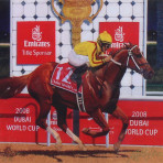 """Curlin in Dubai"""